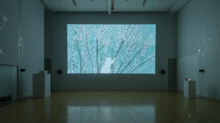 『私の沼』<br>インスタレーション展示<br>2017 / 2018